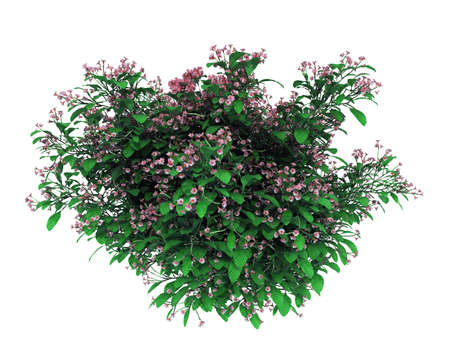 3d rendering of a realistic flower bush isolated on white Stockfoto