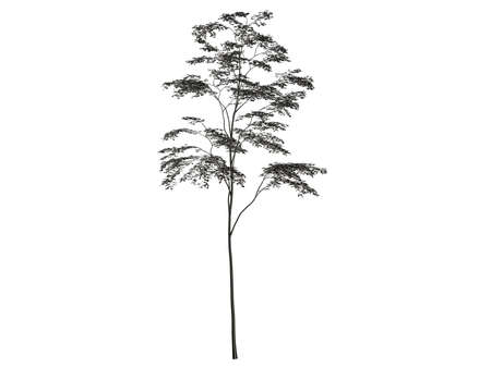 reflect: 3d rendering of a silver tree isolated on a white background