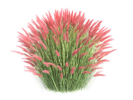3d rendering of a realistic flower bush from front  view isolated on white