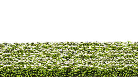 3d rendering of row of flowers isolated on a white background for architectural use which can be easily cut Фото со стока