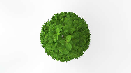 3d rendering of a green plant isolated on a white background