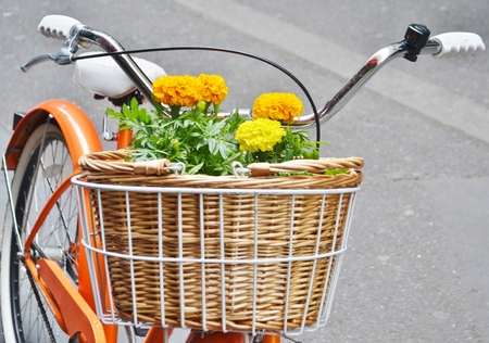 handlebars: Colorful yellow geraniums in a wicker basket attached to the handlebars of an orange bicycle. Stock Photo