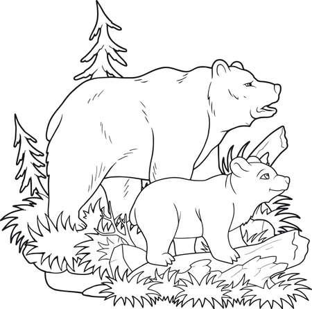 litle: bears