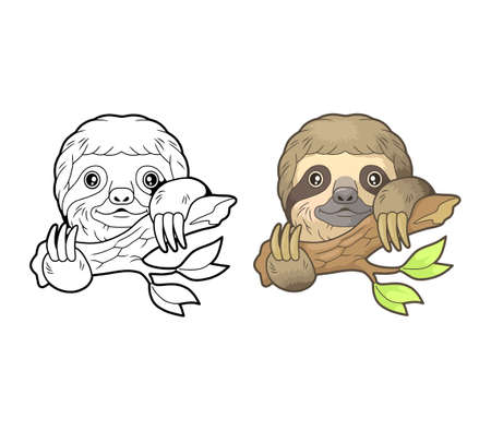 cute little sloth, coloring book, funny illustration