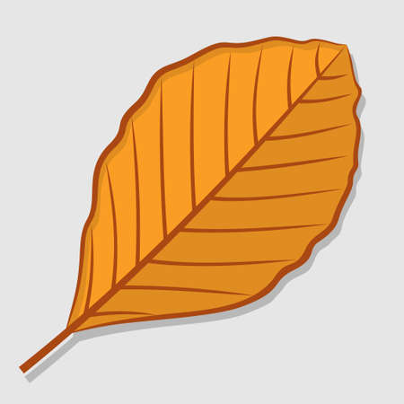 Beech autumn leaf isolated on a white background. Flat design Vector illustration