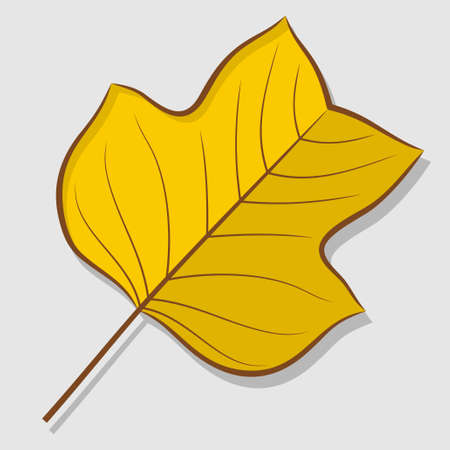 Tulip poplar autumn leaf isolated on a white background. Flat design Vector illustration Vecteurs