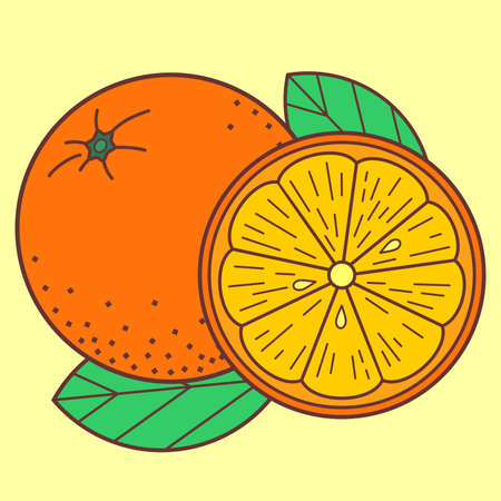 Orange fruit isolated on white background. Vector illustration Ilustrace