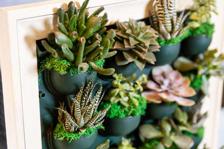Succulents, cactuses on the wall plate
