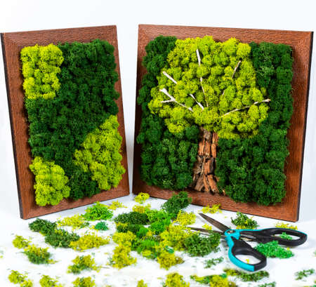 Natural tree shaped moss for wall with scissors, tools