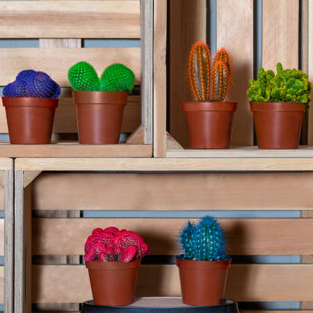 Colorful cactuses in the wooden box