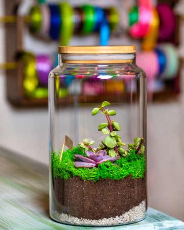 Terrarium plant in glass jar