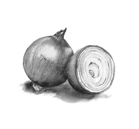 Watercolor illustration.black and white image of a bow. a whole onion and half an onion cut across. isolated on a white background. Foto de archivo