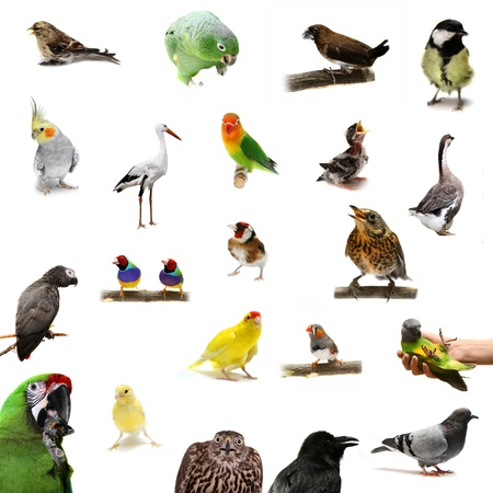 Group of birds on the white background photo