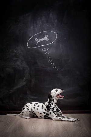 Dalmatian dog on black dreaming about a bone in a thought bubble photo
