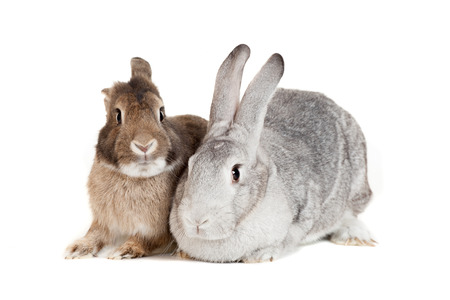 Two rabbits isolated on a white background Stock Photo