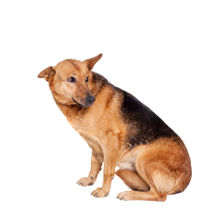 The East-european dog isolated on the white background