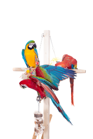 Different macaws on white photo
