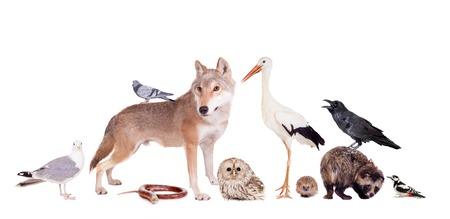 Group of eurasian animals Stock Photo