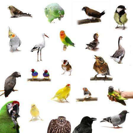 Group of birds on white photo