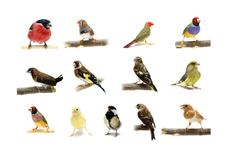Group of small birds on white photo