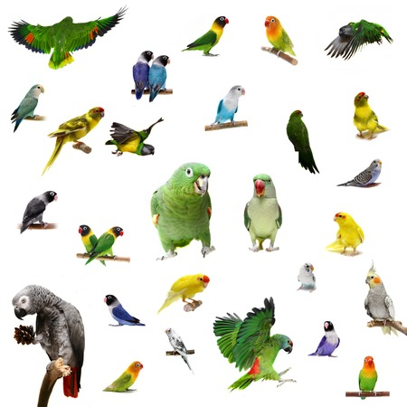 large bird: Set parrots and parakeets