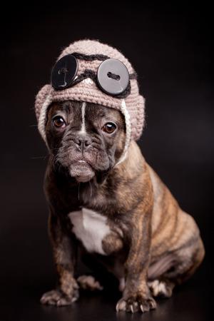 French bulldog puppy in knit pilot helmet