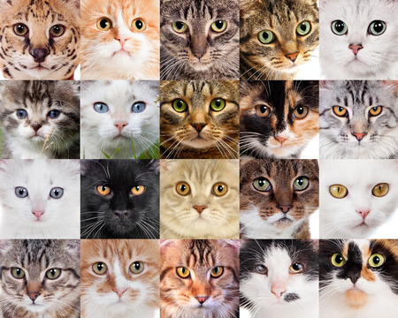 Collage of many different cute cats faces photo