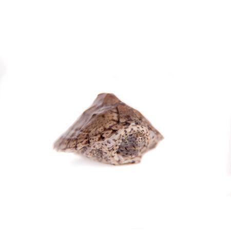 The African keeled mud turtle, Pelusios carinatus, on white photo