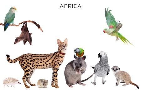 Animaux africains set isolé sur fond blanc Banque d'images - 69438515
