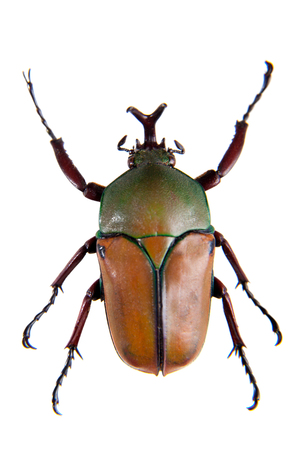 The beetle on the white background Stock Photo