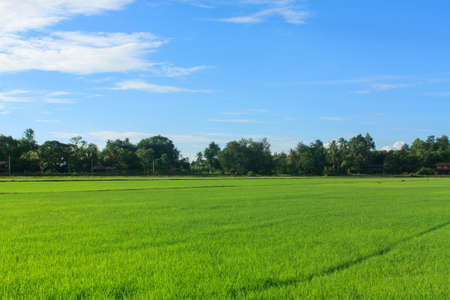 Beautiful green cornfield and blue sky scene at country farm, north of Thailand photo