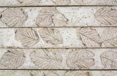 bas relief: Feuilles en bas-relief sur le sol de ciment au parc du nord-est de la Tha�lande Banque d'images