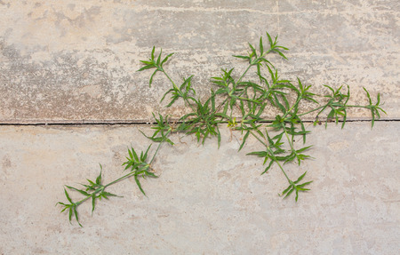 Little grass growing up on the surface of cracking concrete road, Thailand photo