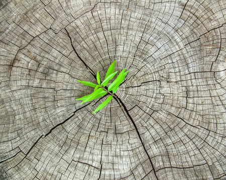 Fresh green grass growth over on crack wooden background, new reborn Stock Photo