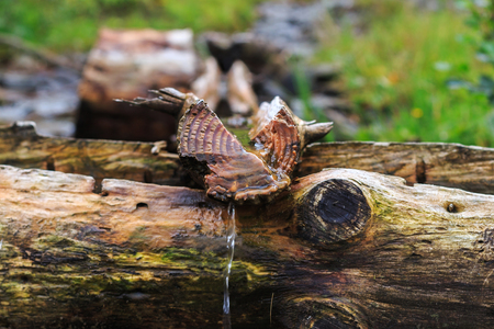 purls: Carpathians, source of spring fresh water. Near mount Petros, selective focus