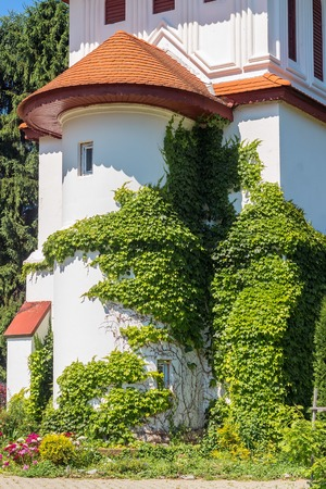 Green Ivy Grows on a ancient building of Brancoveanu orthodox monastery in Sambata de Sus village, Romania. Stock Photo