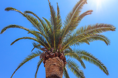 Green palm tree on blue sky background, tropical summer concept. Stok Fotoğraf