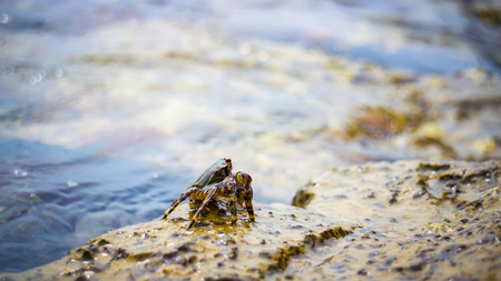 Crab on the stone near the sea at the sunny summer day, close-up view. Stock Photo