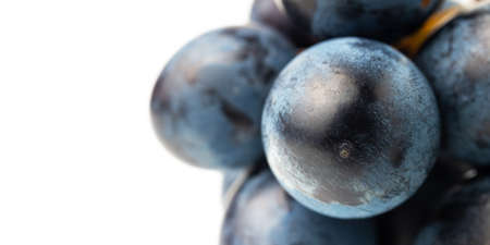 Dark blue grape fruit isolated on white background, close-up view.