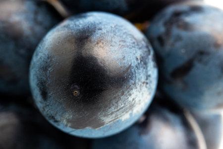 Dark blue grape fruit close-up view.