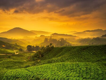 cameron highlands: Cameron Highlands  sunrise Stock Photo