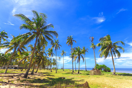 Panoramic view of tropical beach with coconut palm trees. Stockfoto