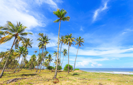 Panoramic view of tropical beach with coconut palm trees. Stockfoto - 96197460