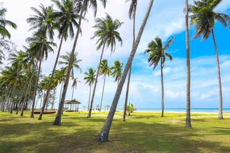 Peaceful scenery of coconut tree and blue sky in Kampung Mangkok, Setiu, Terengganu, Malaysia.