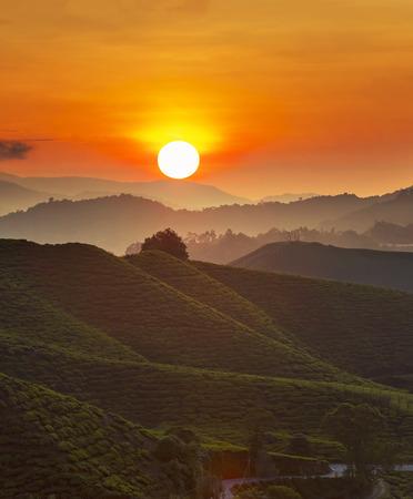 Sunrise of tea plantation in Cameron Highland, Malaysia.