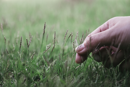Closeup image of a hand touching and picking grass in a field