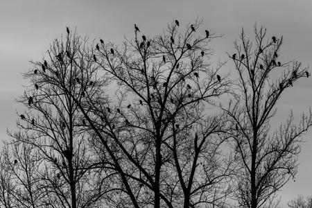 beine spreizen: Kormorane auf Baum Lizenzfreie Bilder