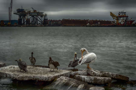Sea birds sitting on boulders at the Port of Galveston with an industrial and cloudy skies.