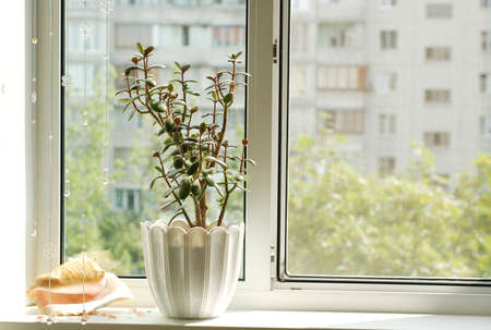 condos: Window with flowerpot in front view Stock Photo