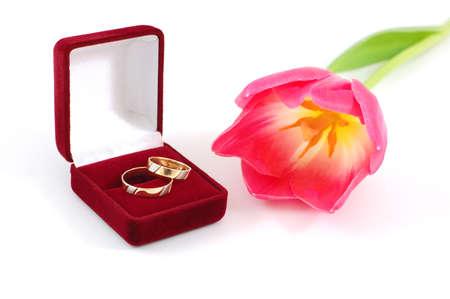 Weddings rings and tulip photo